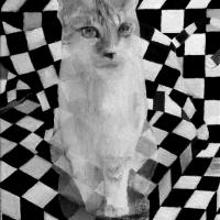 Kaks kassi, õli lõuendil 30x41cm, 2014